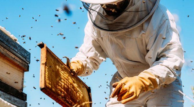 A Nébih Zöld Számán jelenthetőek a méhpusztulási esetek